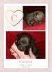 Small #2 Chihuahua