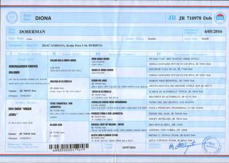Doberman Female Diona needs new home