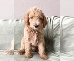 Image preview for Ad Listing. Nickname: Puppy #1 Brick
