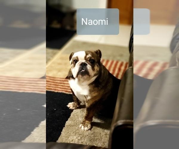 Medium Photo #1 Bulldog Puppy For Sale in GRIFFIN, GA, USA