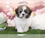 Image preview for Ad Listing. Nickname: Coco