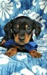 Small #5 Dachshund