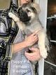 Small #14 German Shepherd Dog