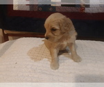Image preview for Ad Listing. Nickname: Little Pup