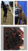 Doberman Pinscher Puppy For Sale in CALDWELL, TX, USA