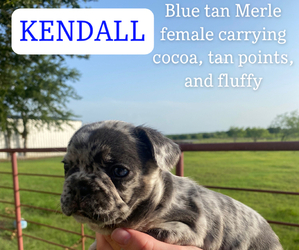 French Bulldog Puppy for sale in WAXAHACHIE, TX, USA