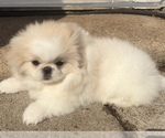 Image preview for Ad Listing. Nickname: Gracie