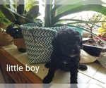 Image preview for Ad Listing. Nickname: Little Boy