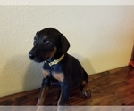 Small #14 Doberman Pinscher