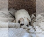 Small #94 Great Pyrenees