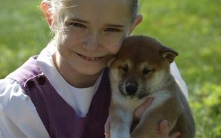 Shiba Inu Puppy For Sale in SANTA CRUZ, CA