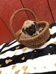 Pug Puppy For Sale in BELLEVILLE, PA, USA