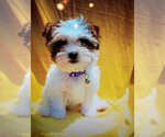Image preview for Ad Listing. Nickname: Little Daisy