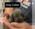 Image preview for Ad Listing. Nickname: Gray