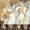American Pit Bull Terrier Puppy For Sale in EL PASO, TX,