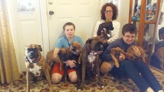 Boxer Puppy For Sale in ARROYO GRANDE, CA