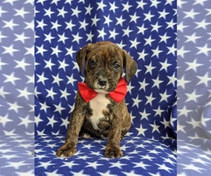 Beabull Puppy for sale in LINCOLN UNIV, PA, USA