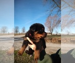Small #23 Rottweiler