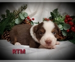 Image preview for Ad Listing. Nickname: New year puppie