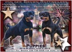 Rottweiler Puppy For Sale in SOPHIA, North Carolina,