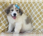 Small #8 Great Pyrenees