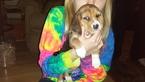 Puppy 4 Beagle