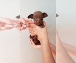 Image preview for Ad Listing. Nickname: Chihuahua