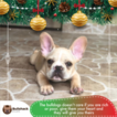 Bulldog Puppy For Sale in CUTLER BAY, FL, USA