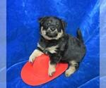Puppy 2 Poo-Shi
