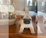 Small #2 Pug