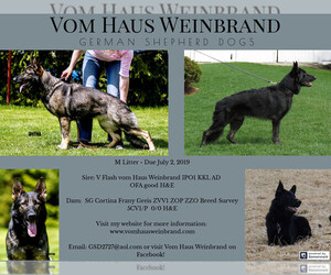 German Shepherd Dog Puppy for sale in BARB, OH, USA