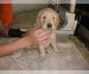 Puppies for Sale near Saint Cloud, Minnesota, USA, Page 1 (10 per