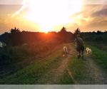 Small #4 German Shepherd Dog