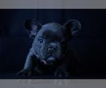 Image preview for Ad Listing. Nickname: Barbi