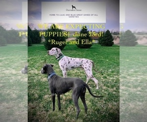 Great Dane Puppy for sale in KEWASKUM, WI, USA