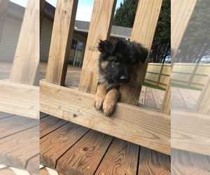 German Shepherd Dog Puppy for sale in INMAN, SC, USA