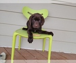Image preview for Ad Listing. Nickname: Chocolate Labs