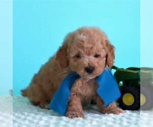 Puppies For Sale Near Johnstown Pennsylvania Usa Page 1 10 Per