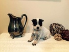 Australian Cattle Dog Puppy For Sale in JEFFERSON, SC