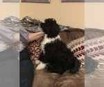 Small #6 Portuguese Water Dog
