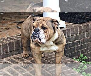 Puppies for Sale near Flovilla, Georgia, USA, Page 1 (10 per