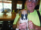 Boxer Puppy For Sale in BLUE CREEK, OH, USA