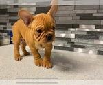 Image preview for Ad Listing. Nickname: Franki