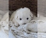 Small #62 Great Pyrenees