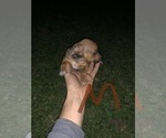 Small #5 Taco Terrier