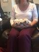 Labrador Retriever Puppy For Sale in LAVEEN, AZ, USA