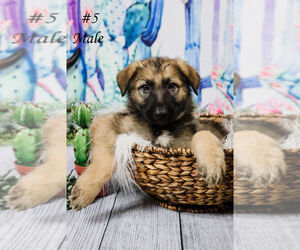 German Shepherd Dog Puppy for sale in 29 PALMS, CA, USA