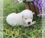Image preview for Ad Listing. Nickname: Trixie