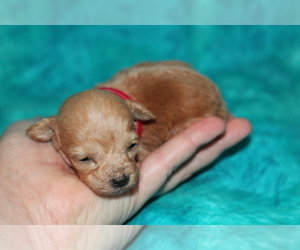 - Mix Puppy for Sale in GRAY, Louisiana USA