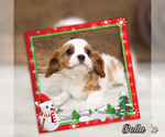 Image preview for Ad Listing. Nickname: Bella